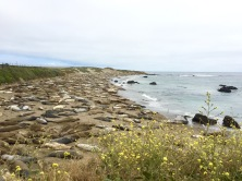 Elephant seals! San Simeon, CA, May 2016