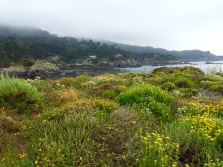 Point Lobos State Reserve, CA, May 2016