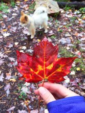 Maple leaf -- one of my fall favorites.