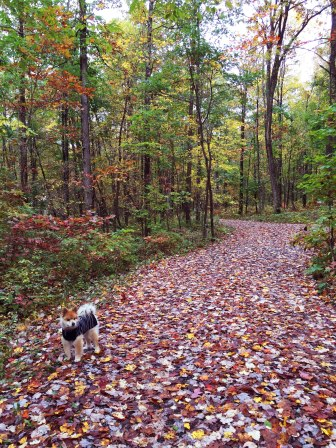 Sammie soaking in the scene -- or looking for squirrels.