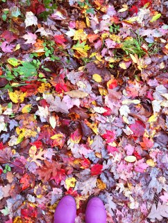 All of the trails were covered in pretty shiny leaves.