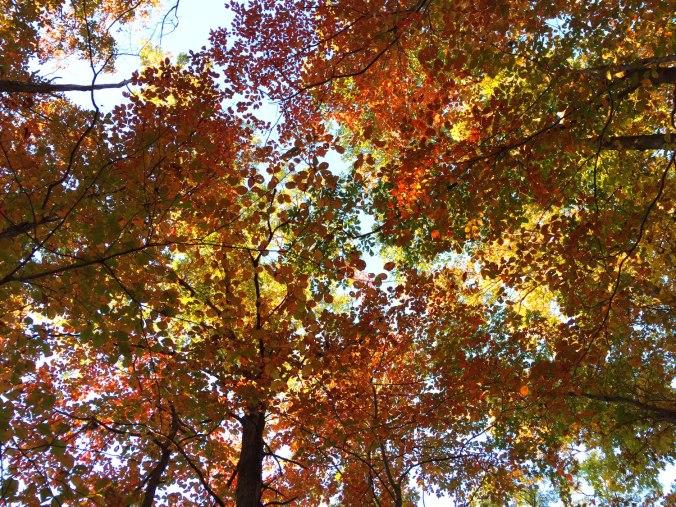 Appalachian Trail view.