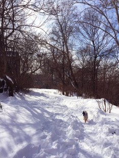 Sammie by a snowy Rock Creek Park!