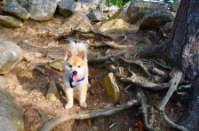 A hike in the woods is never complete without Sammie. :)