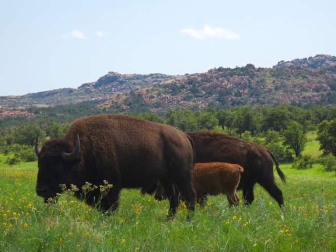 A Visit to the WichitaMountains